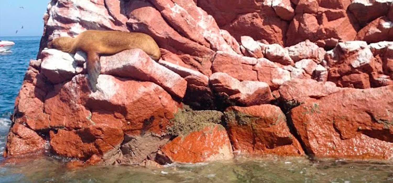 peruvian-shades-excursion-sur-chico-full-day-paracas-4