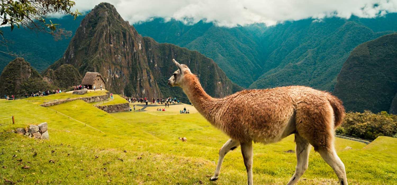 Llama-Machu-Picchu-Cusco-Peru-Peruvian-Shades